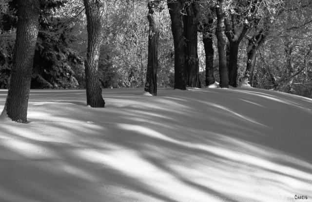 Snow on snow on snow