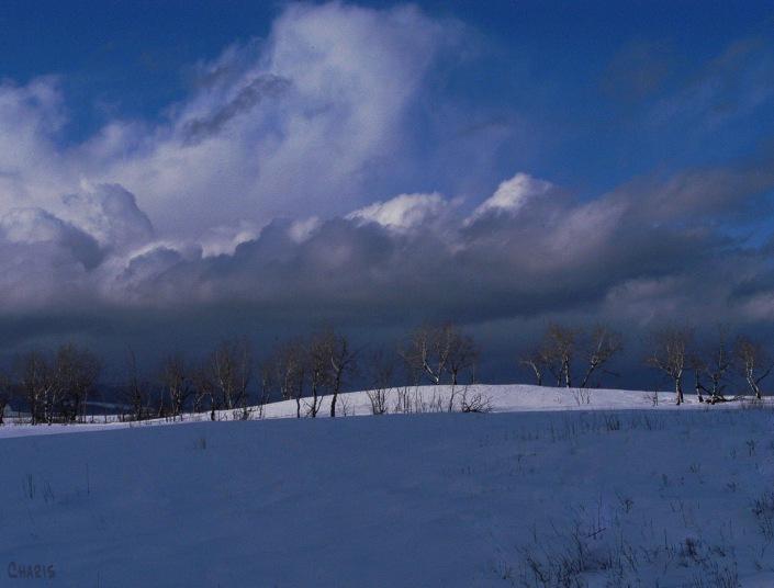 pighin aspen hill