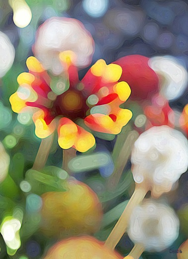 strawflower blur