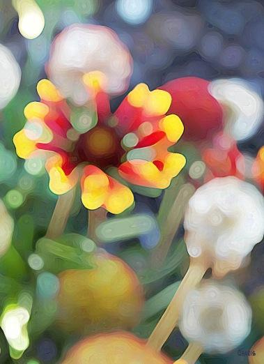 strawflower blur