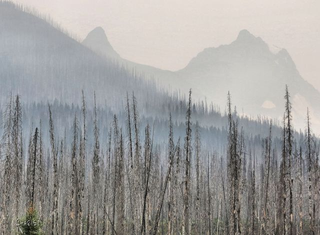 forest fire IMG_0647
