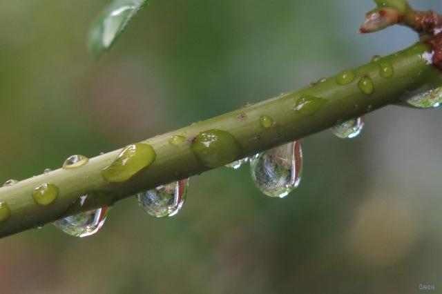 IMG_1866 four raindrops