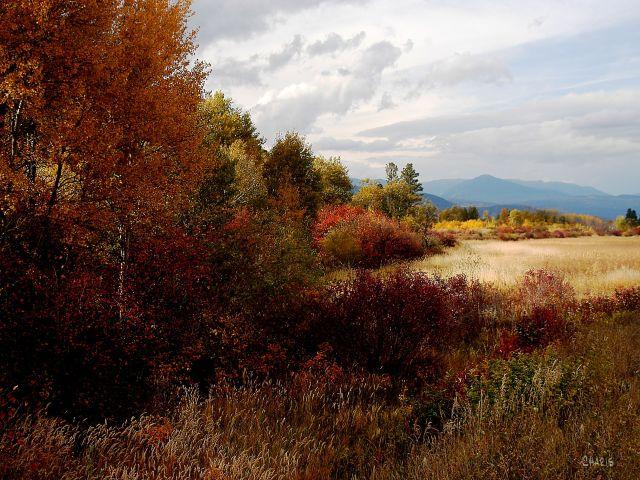 autumn wasa