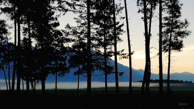 IMG_1996 steeples fog trees silhouette