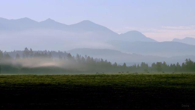 IMG_2039 cows fog