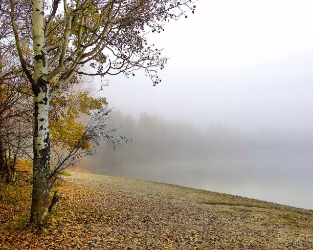 shoreline fog