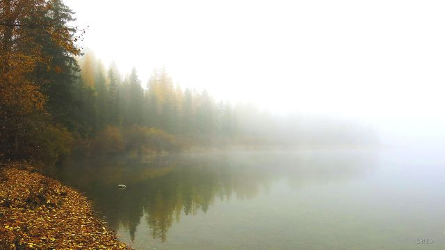 IMG_5372 jimsmith fog 3
