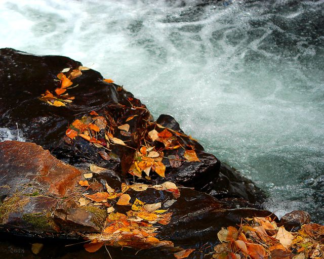 st marys falls leaves on rock