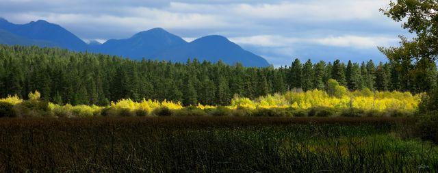 wasa yellow bushes IMG_2771