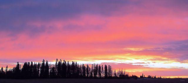 prairie dawn 2 IMG_5069