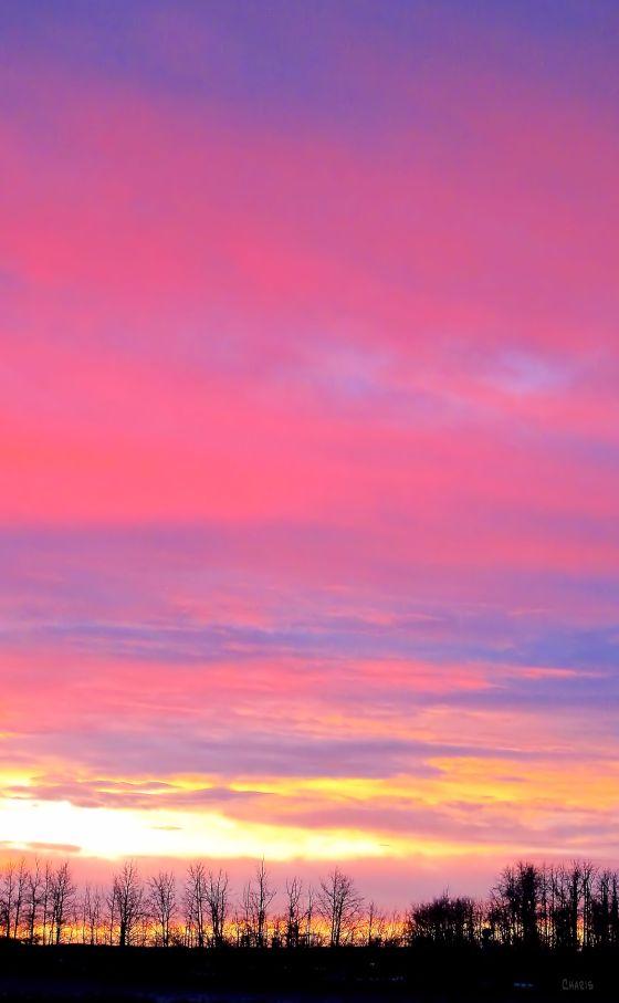 prairie dawn vertical IMG_5060