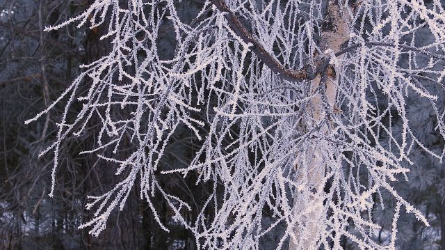 cme birch frost IMG_6735