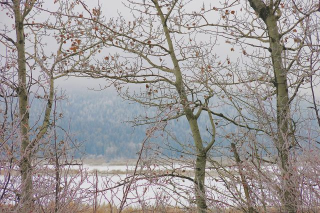 Elizabeth Lake aspen frost IMG_6828