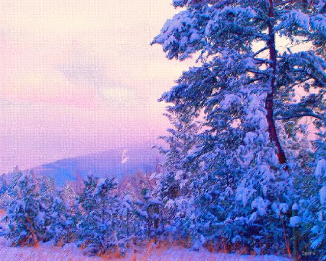 gentle winter pastel