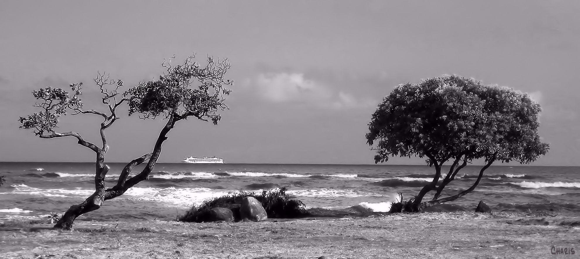 The view from Kauai