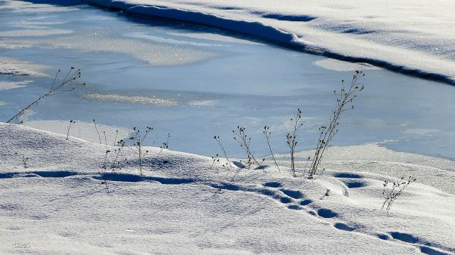 Wildhorse Creek snow ice IMG_7217