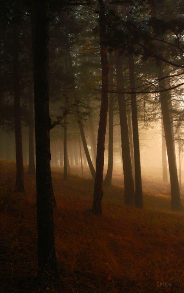 forest fog DSC_0329 ch