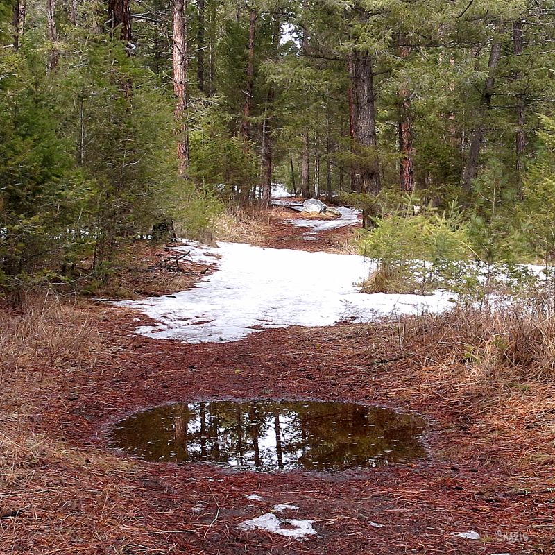 IMG_7407 forest puddle