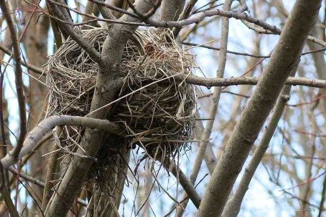 IMG_7537 bird's nest