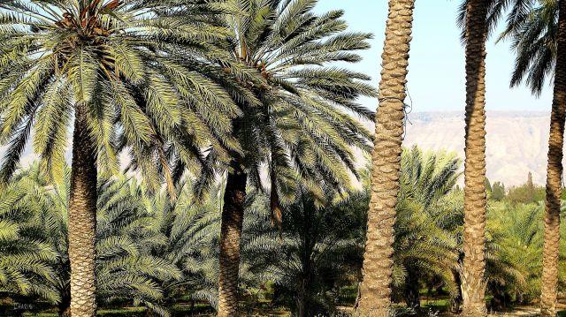 IMG_7695 Galilee date farm ch