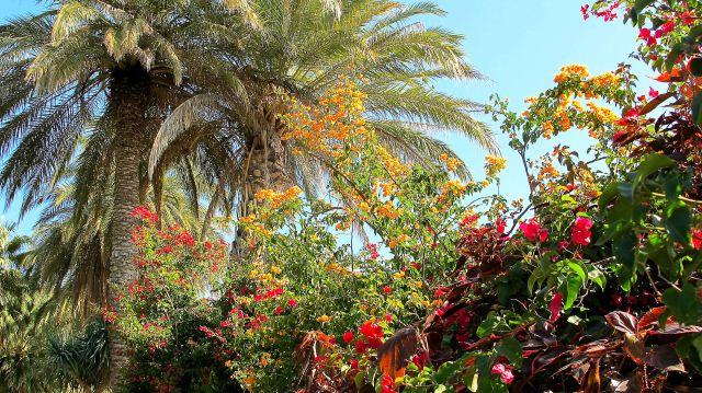 IMG_8177 Galilee garden path bougan