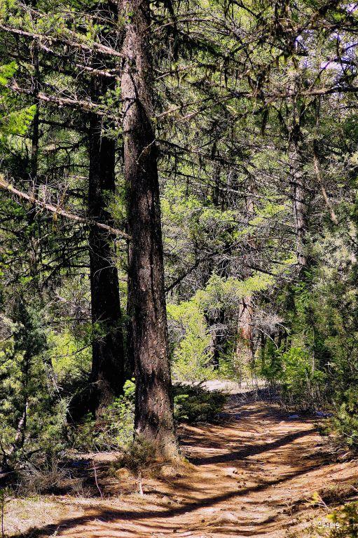 IMG_7876 woods path
