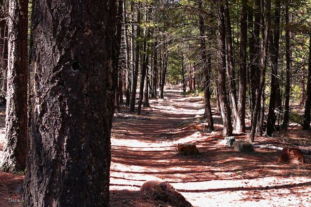 IMG_7882 woods