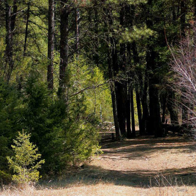 IMG_7887 woods 4