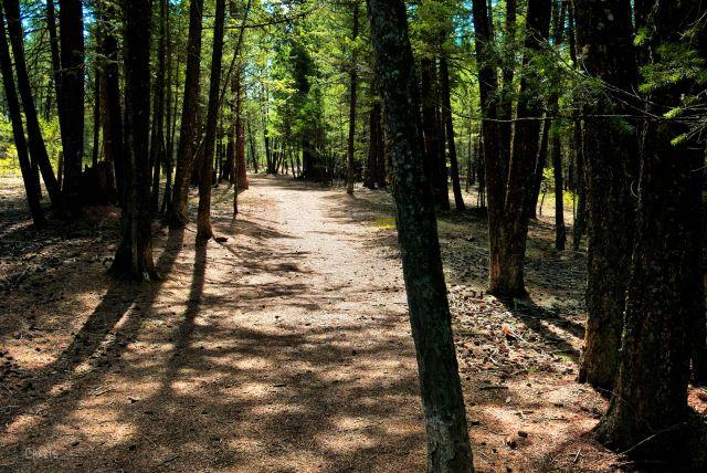 IMG_7911 woods 5
