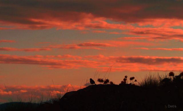 bird silhouette pink clouds ch
