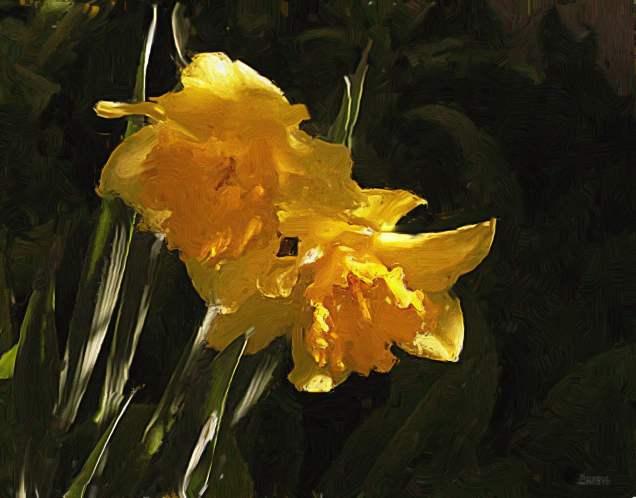 Daffodils impasto