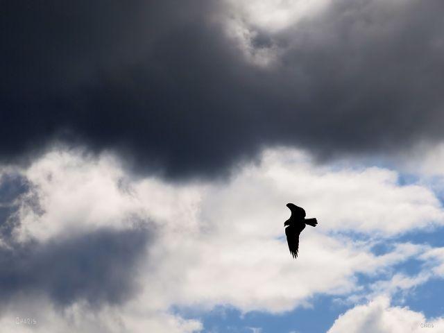 IMG_8613 osprey clouds ch