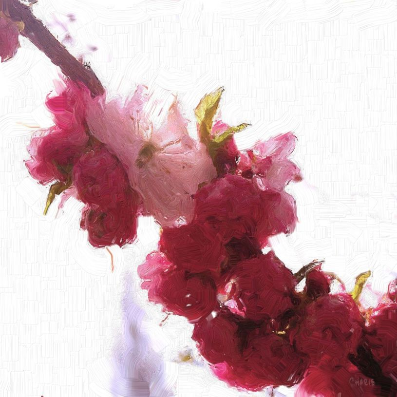 plum blossoms impasto rt