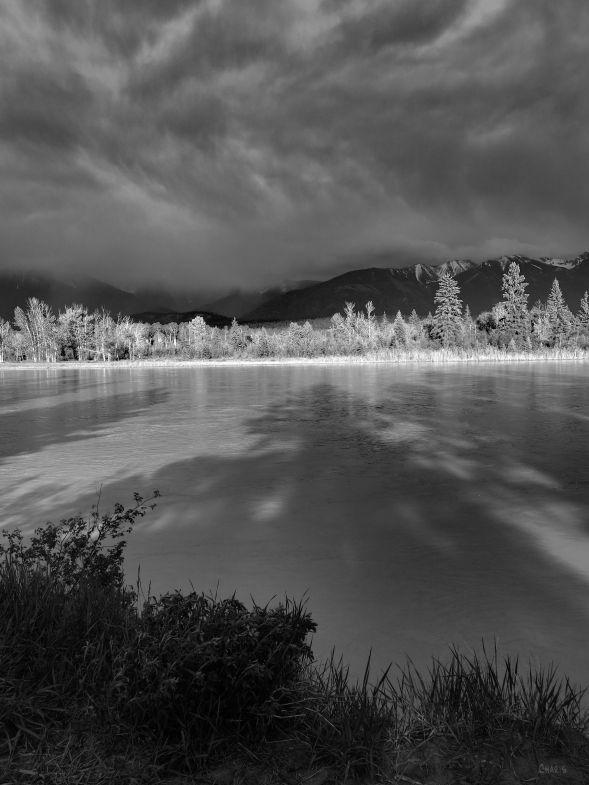 IMG_9932 kootenay river tree shadow bw