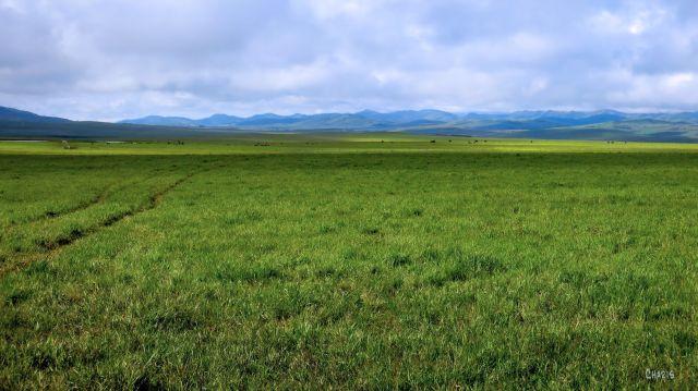 IMG_0644 green pasture longview