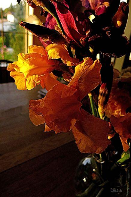IMG_1435 Wendy's irises 2 ch