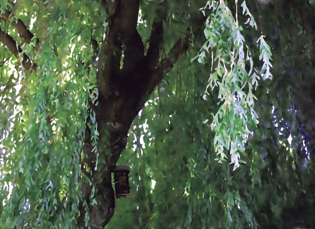 willow birdhouse watercolour