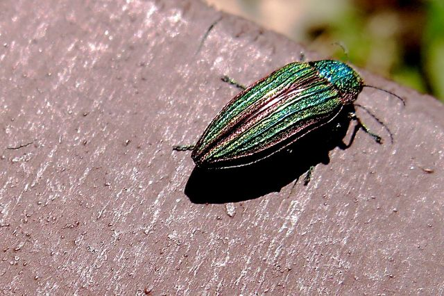 IMG_1119 pretty bug