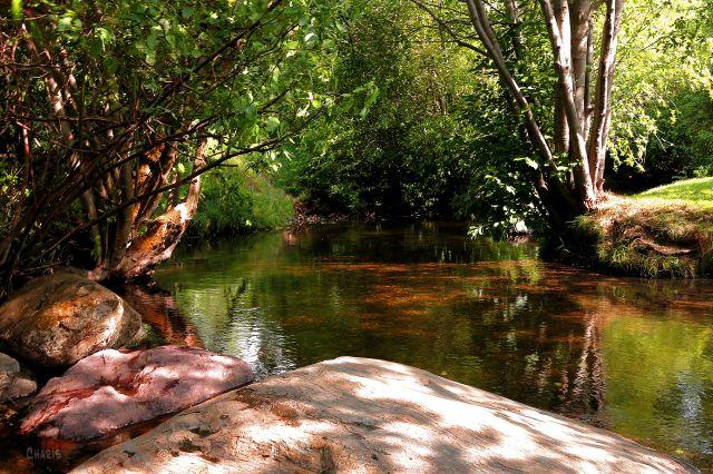 Joseph's Creek IMG_2342