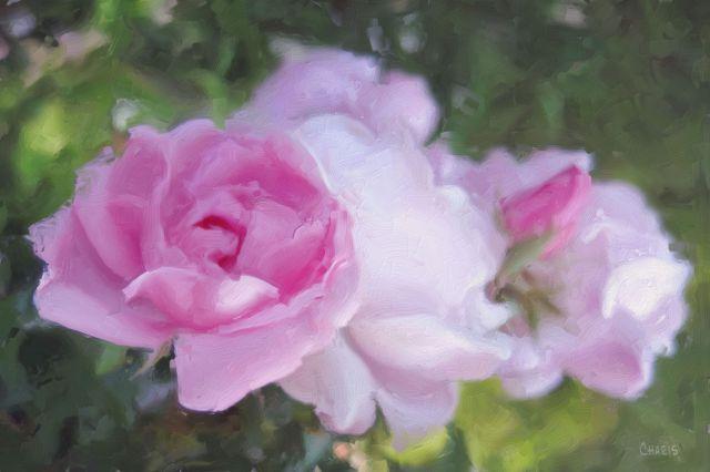 pink rose impasto