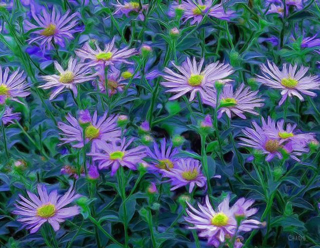 asters gouache crop