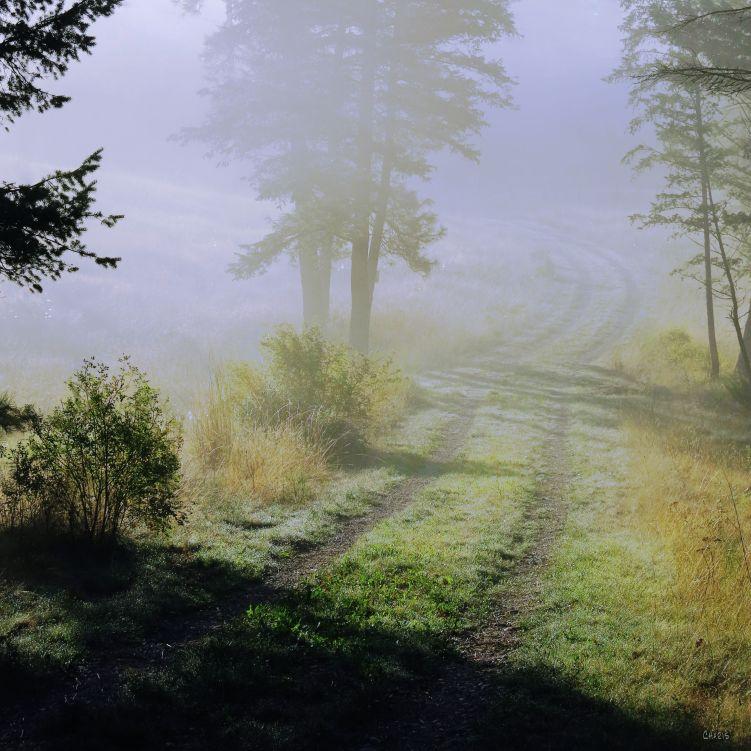 hoh path fog  ch IMG_4726