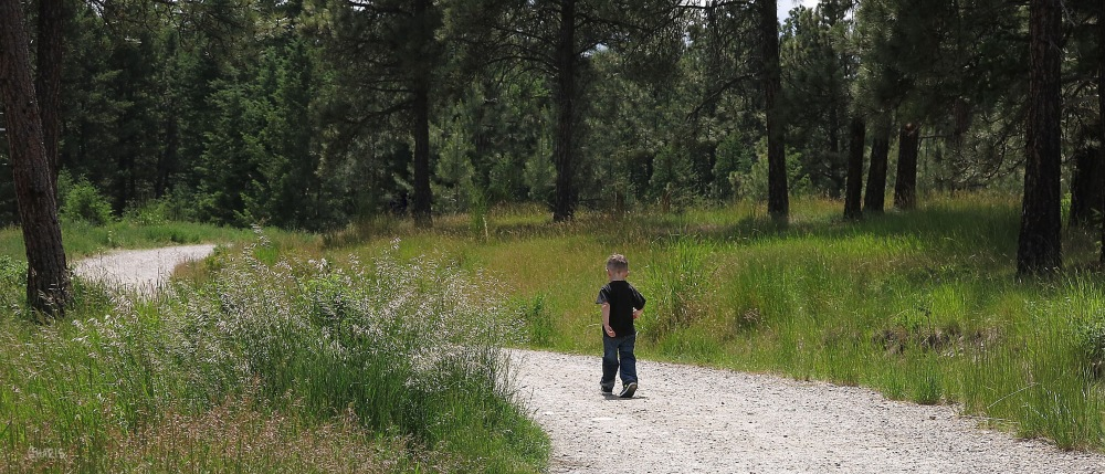 IMG_1126 boy walk forest path ch alone