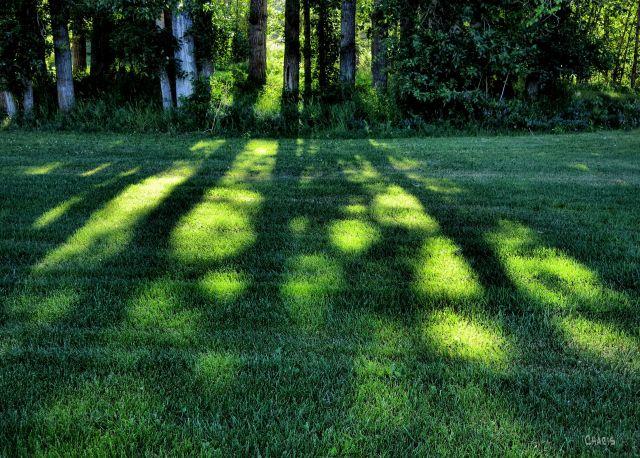 IMG_2100 sun on grass trees