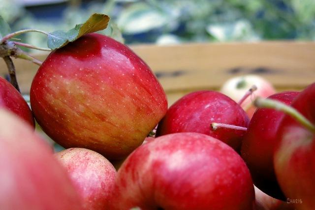 IMG_4936 apples_edited-1