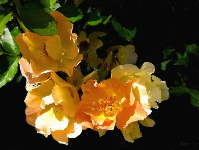 Okanagan roses impasto_bak ch