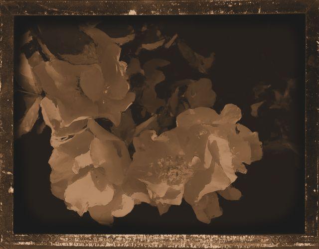 Okanagan roses impasto_daguerrotype