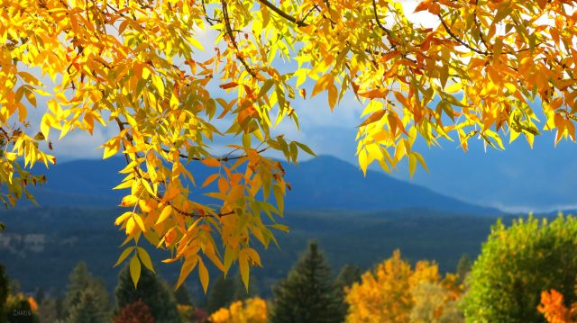 autumn colour on my street ch