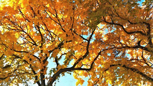 Edmonton autumn elm gouache ch