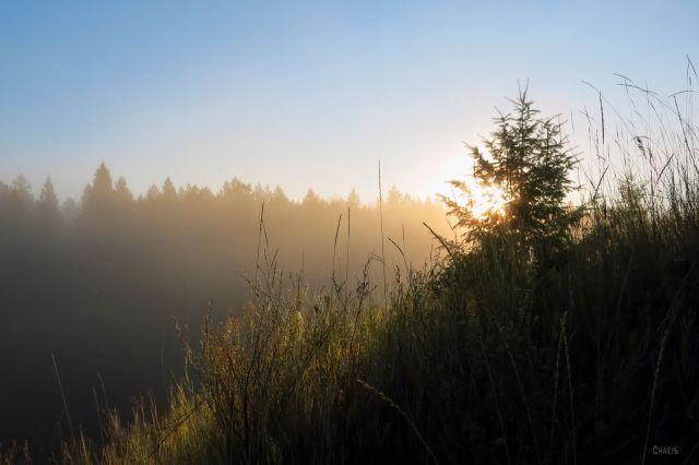 hoh fog grass trees diagonal IMG_4662